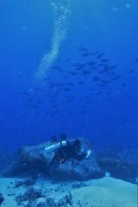 Tutus Wijanarko meneliti ikan kawin! (foto: Taufik Abdillah)