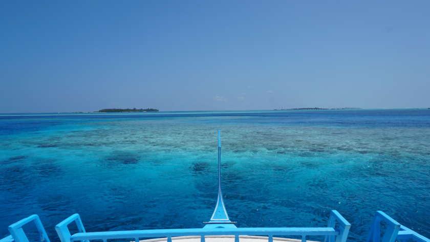 Diving sama hiu di Maldives